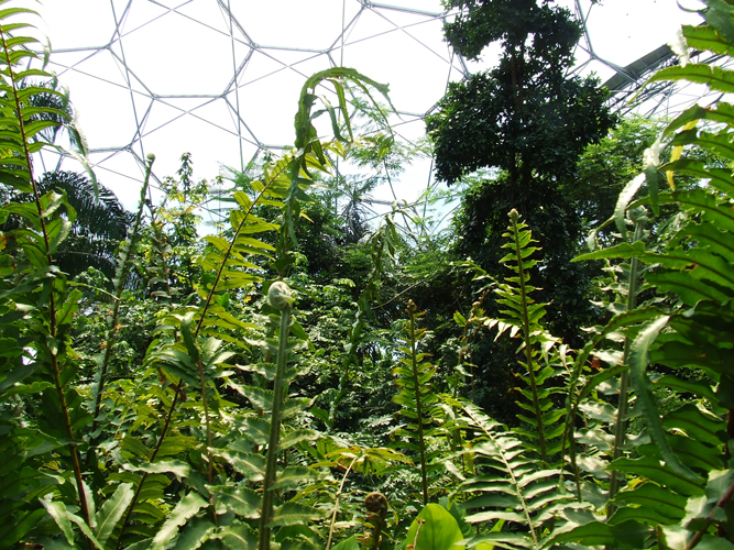 Picture: The Eden Project, Image Credit: Photographer Katrina Malley